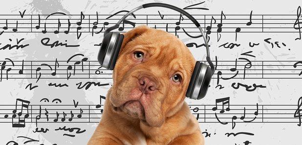 cute musical dog