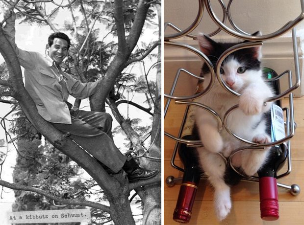 Cat composer lookalike Bernstein