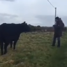 Joseph Calleja sings to a cow